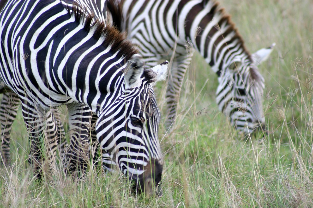 04 Lac Nakuru National Park_02 Safari_IMG_5614.jpg