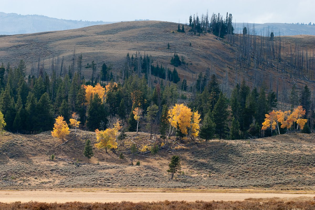 050 Yellowstone_CRW_3130.jpg