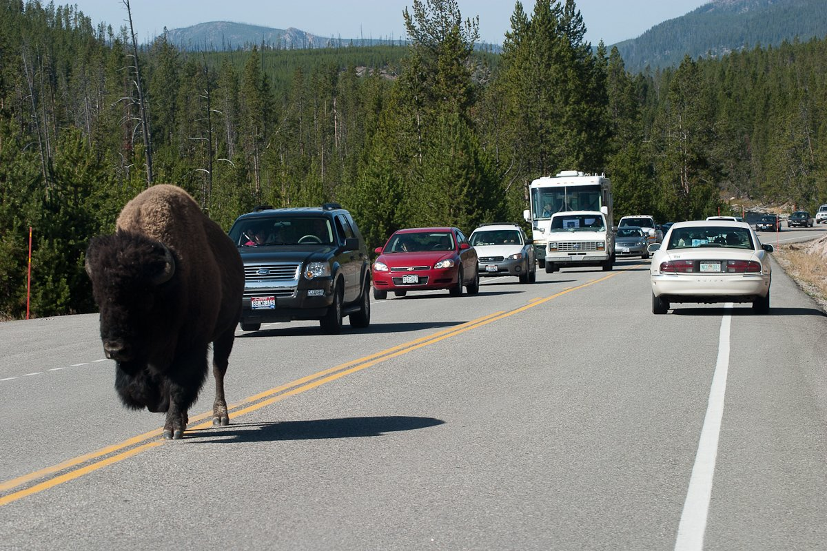 050 Yellowstone_CRW_3421.jpg